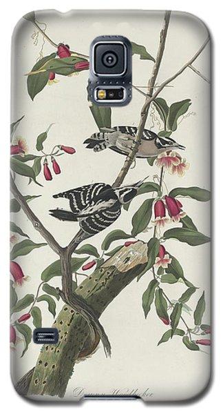 Downy Woodpecker Galaxy S5 Case by Anton Oreshkin