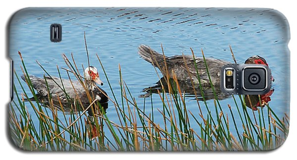 Galaxy S5 Case featuring the photograph 2- Ducks by Joseph Keane