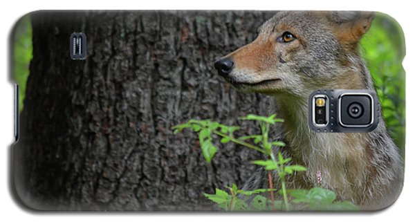 Early Morning Coyote In Maine Galaxy S5 Case