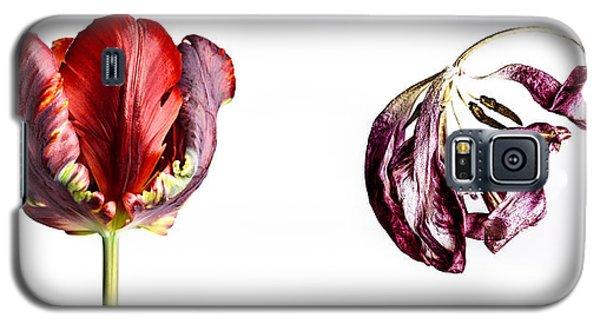 Tulip Galaxy S5 Case - Fading Beauty by Nailia Schwarz