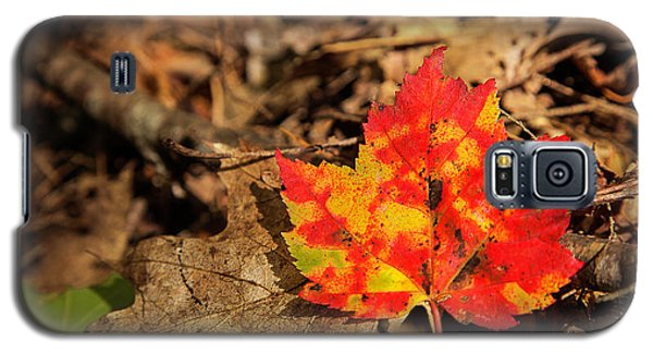 Fall In New Hampshire Galaxy S5 Case
