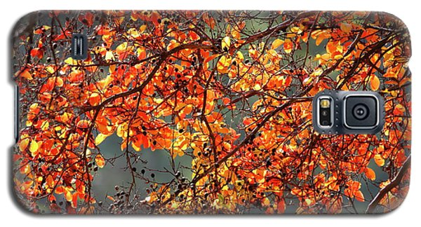 Galaxy S5 Case featuring the photograph Fall Leaves by Nicholas Burningham