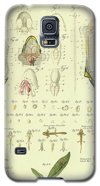 Galaxy S5 Case featuring the drawing Fire Salamander Anatomy by Christian Leopold Mueller