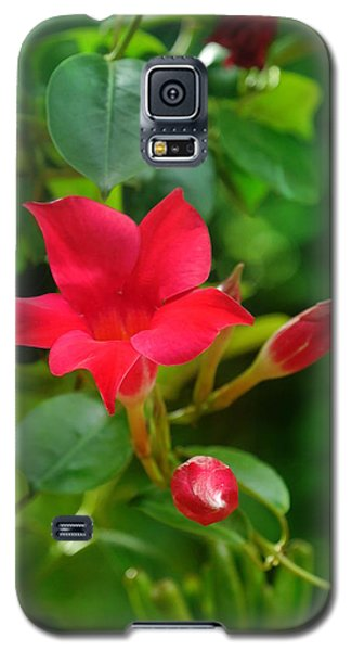 Galaxy S5 Case featuring the photograph Flowers by Bernd Hau