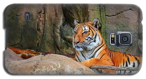 Fort Worth Zoo Tiger Galaxy S5 Case