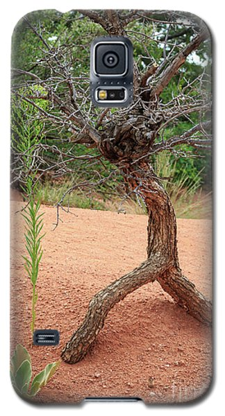 Garden Of The Gods Galaxy S5 Case