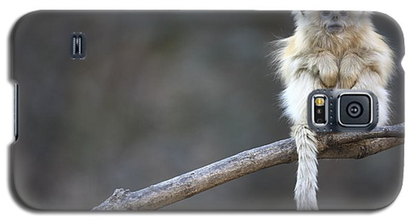 Golden Snub-nosed Monkey Rhinopithecus Galaxy S5 Case