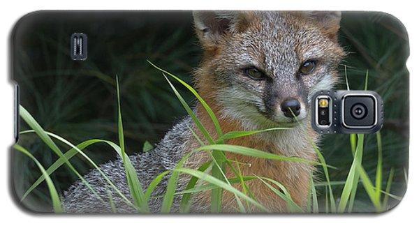 Gray Fox In The Grass Galaxy S5 Case