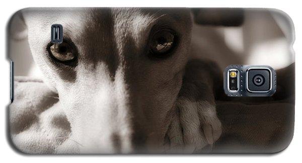 Heart You Italian Greyhound Galaxy S5 Case
