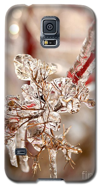 Icy Branches Galaxy S5 Case