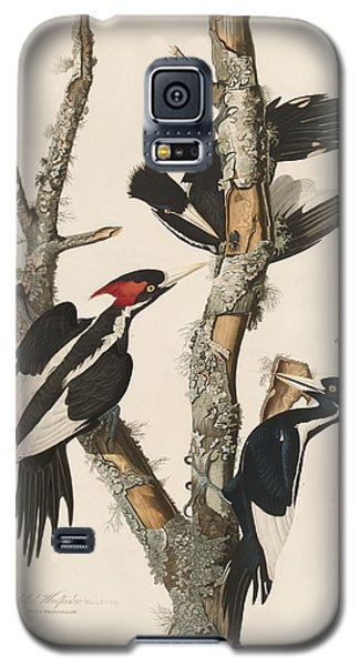 Ivory-billed Woodpecker Galaxy S5 Case by Rob Dreyer