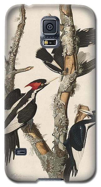 Ivory-billed Woodpecker Galaxy S5 Case