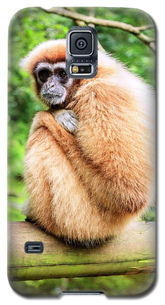 Galaxy S5 Case featuring the photograph Lar Gibbon by Alexey Stiop