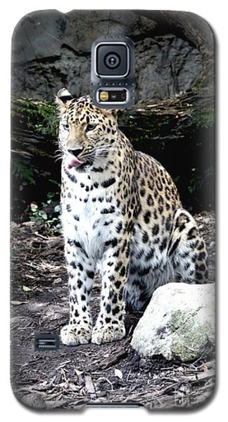 Galaxy S5 Case featuring the photograph Leopard by Janice Spivey