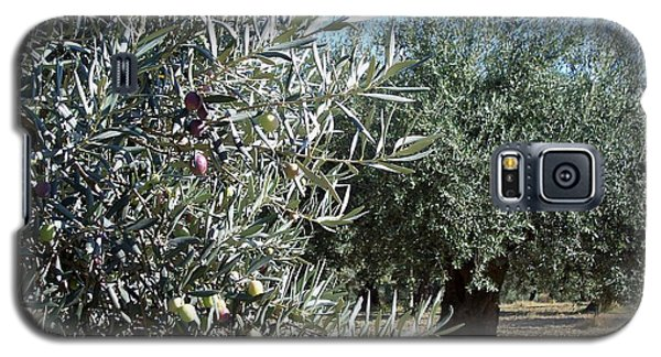Galaxy S5 Case featuring the photograph Olive Trees by Judy Kirouac
