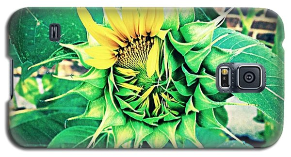 Galaxy S5 Case featuring the photograph Peeping Sunflower by Angela Annas