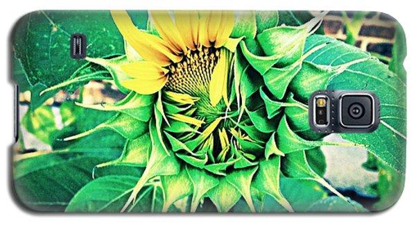 Peeping Sunflower Galaxy S5 Case