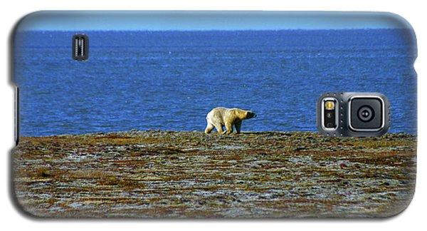 Polar Bear Galaxy S5 Case