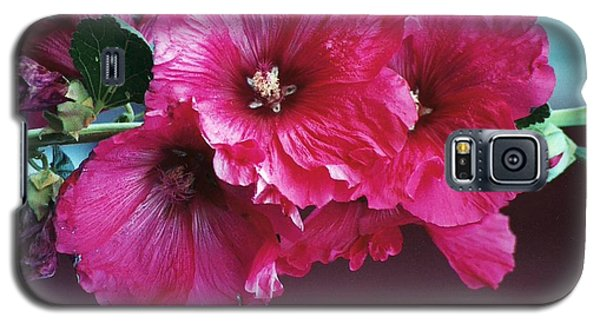 Galaxy S5 Case featuring the photograph P's Hollyhocks by Juls Adams