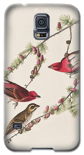 Purple Finch Galaxy S5 Case