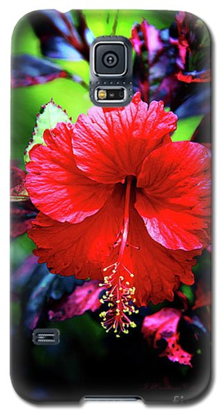 Red Hibiscus 2 Galaxy S5 Case