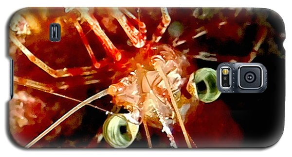 Red Night Shrimp Galaxy S5 Case by Amy McDaniel