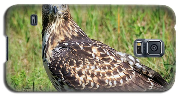 Red-tail Portrait Galaxy S5 Case