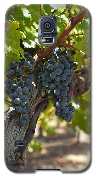 Galaxy S5 Case featuring the photograph Red Vines by Ulrich Schade