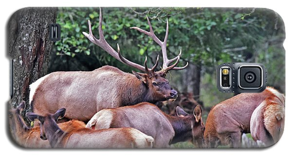 Galaxy S5 Case featuring the photograph  Royal Roosevelt Bull Elk by Jack Moskovita