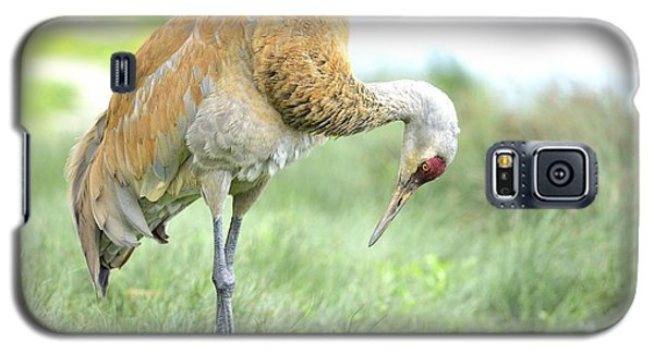 Galaxy S5 Case featuring the photograph Sandhill Crane by Kathy King