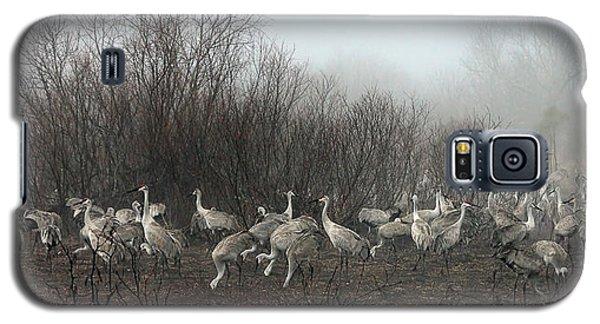 Sandhill Cranes And The Fog Galaxy S5 Case by Farol Tomson