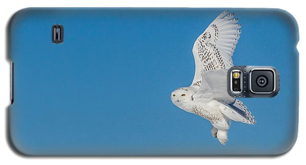 Galaxy S5 Case featuring the photograph Snowy Owl by Dan Traun