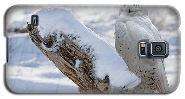 Galaxy S5 Case featuring the photograph Snowy Owl by Jim  Hatch