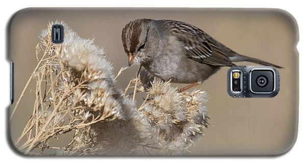 Sparrow Galaxy S5 Case