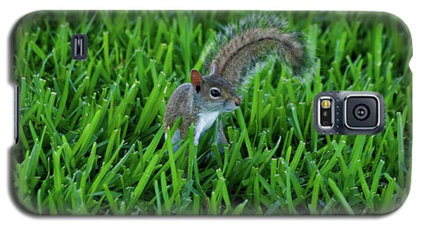 Galaxy S5 Case featuring the photograph 2- Squirrel by Joseph Keane