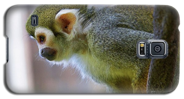 Squirrel Monkey Galaxy S5 Case