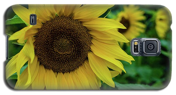 Sunflower Fields Galaxy S5 Case