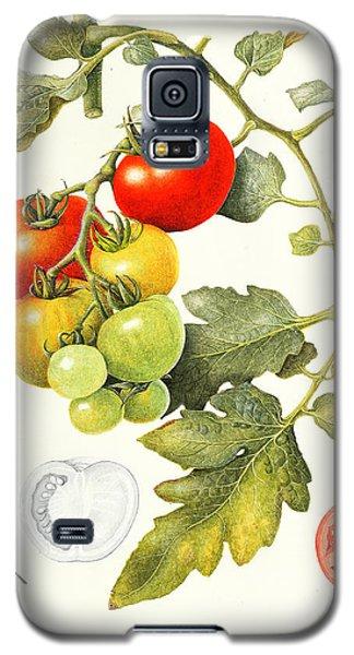 Tomatoes Galaxy S5 Case by Margaret Ann Eden