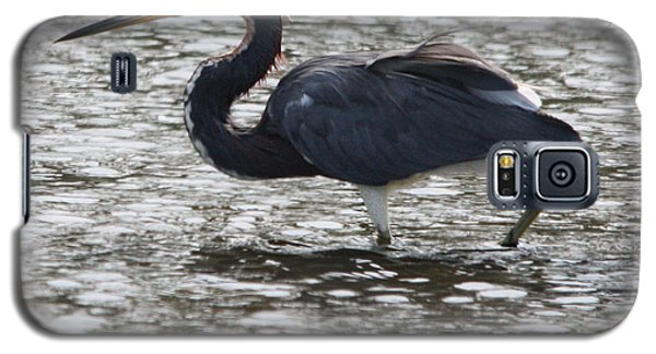 Tricolored Heron Galaxy S5 Case