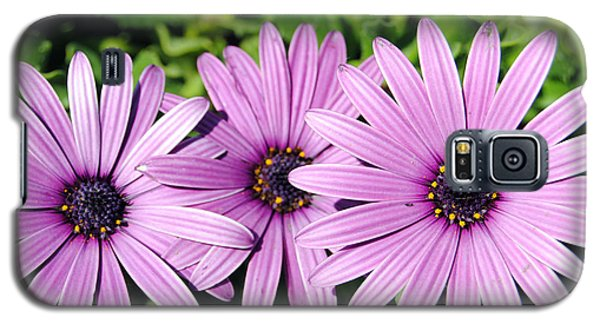 The African Daisy 2 Galaxy S5 Case