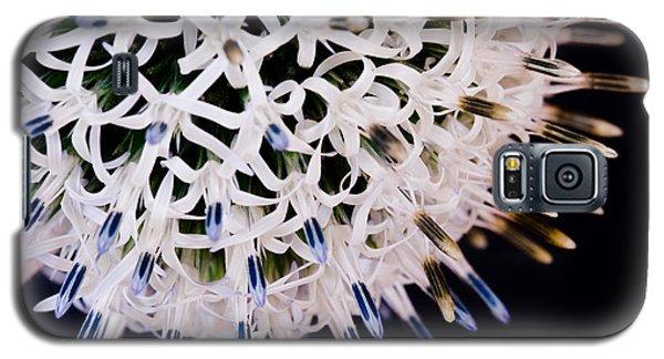 White Alium Onion Flower Galaxy S5 Case