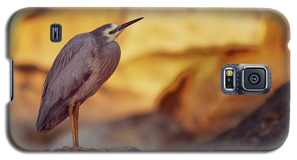 White-faced Heron At The Beach Galaxy S5 Case