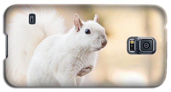 White Squirrel Galaxy S5 Case