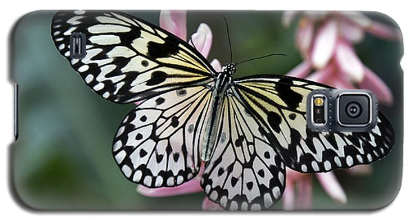 White Tree Nymph Butterfly Galaxy S5 Case