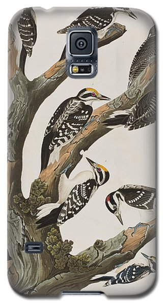 Woodpeckers Galaxy S5 Case by John James Audubon