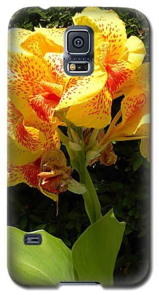 Yellow Canna Lily Galaxy S5 Case by Terri Mills