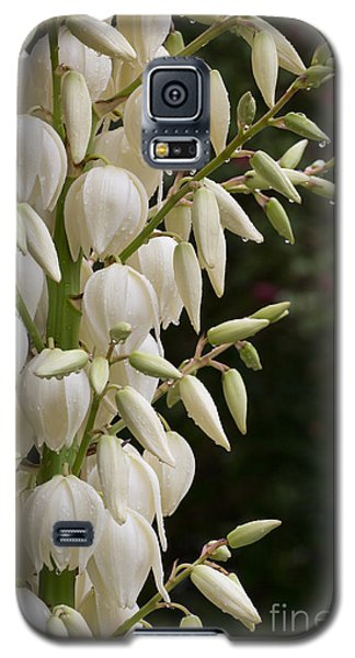 Yucca Plant In Bloom Galaxy S5 Case