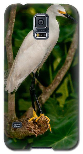 Galaxy S5 Case featuring the photograph White Egret by Christopher Holmes