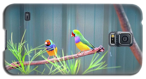 Aussie Rainbow Lovebirds Galaxy S5 Case