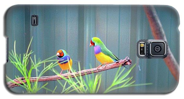 Aussie Rainbow Lovebirds Galaxy S5 Case
